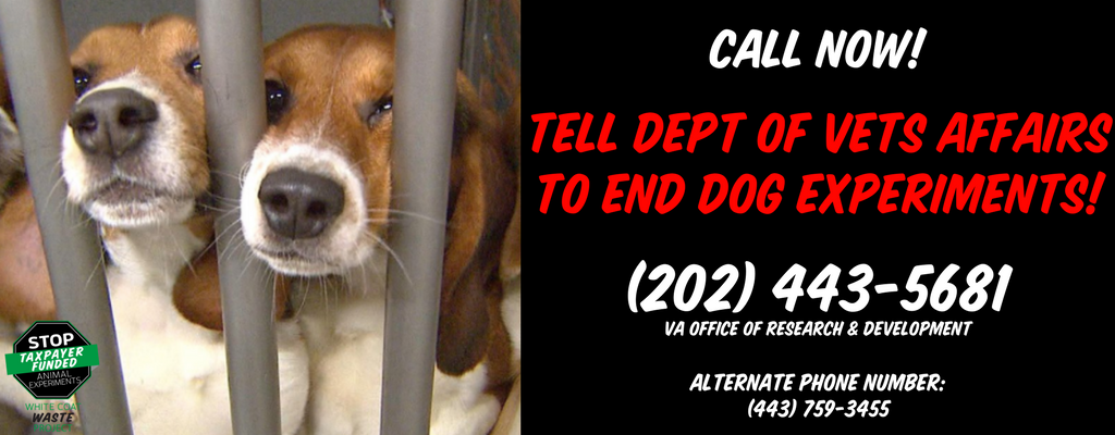 Dial for dogs: Tell the V A  to stop taxpayer-funded dog